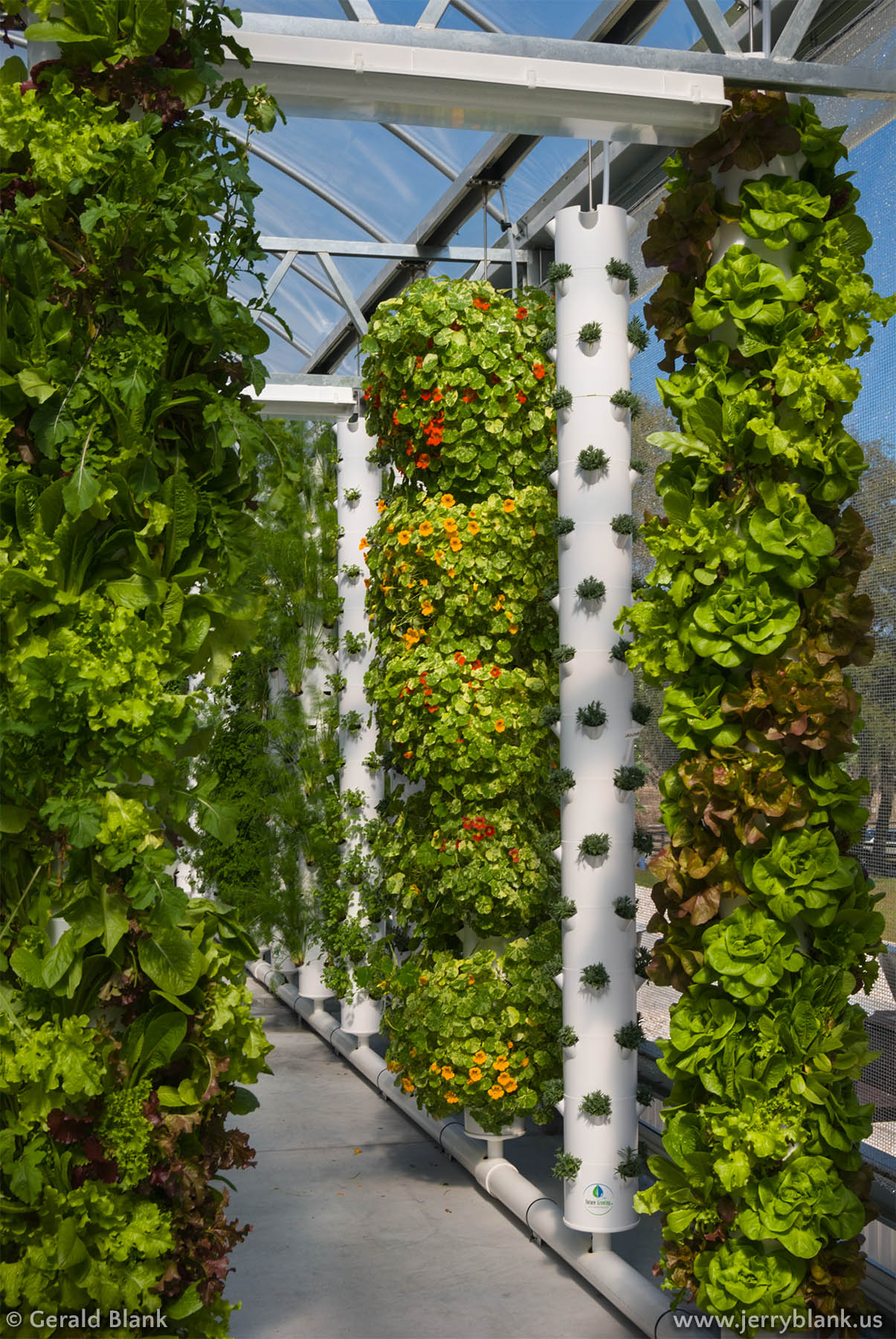 #14148 - 12-foot Tower Gardens at Living Towers Hydroponic Farm in Lake County, central Florida