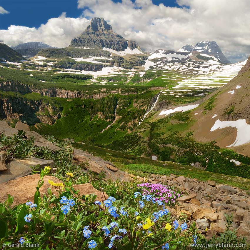 #00042 - Looking toward Reynolds Mountain and the Continental Divide, alpine wildflowers spring to life on the southwest slope of Piegan Mountain in Glacier National Park, Montana - photo by Jerry Blank