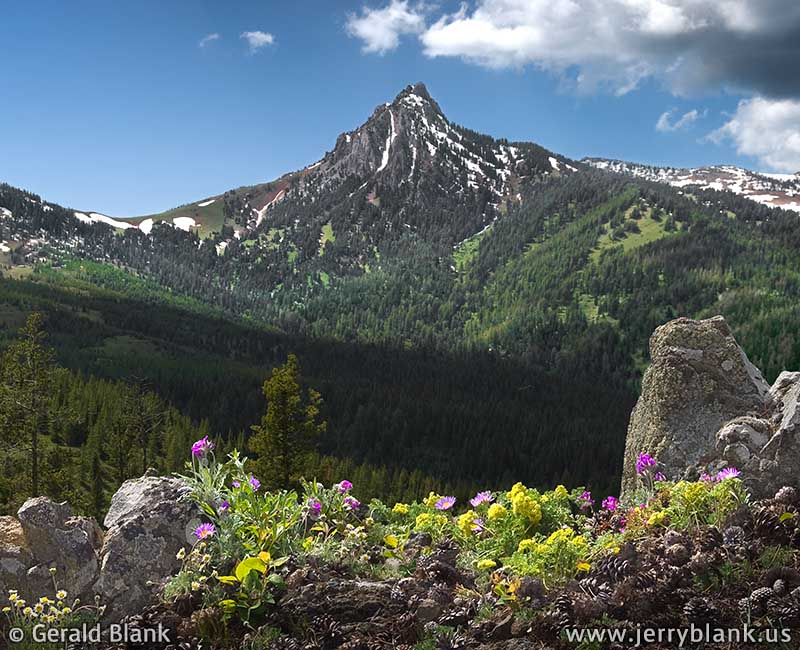 #07842 - Spring wildflowers on the Ross Pass trail, just east of Ross Peak in Montana's Bridger Mountains - photo by Jerry Blank