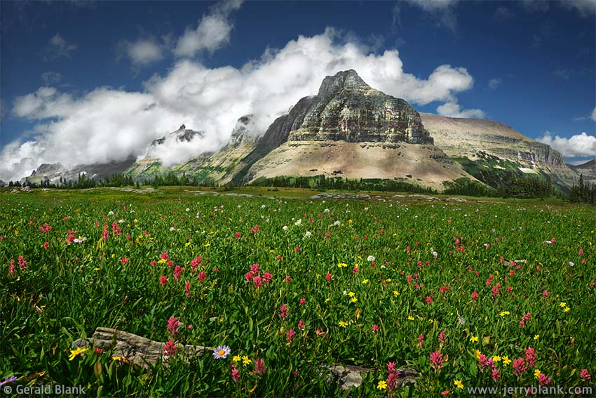 #24533 - A north view toward Bishop's Cap, the Garden Wall, the south ridge of Pollock Mtn., and the east ridge of Piegan Mtn., from an alpine meadow filled with arnica and scarlet paintbrush, on the Continental Divide, in Glacier National Park, Montana - photo by Jerry Blank